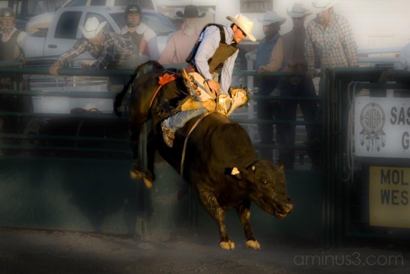 bull riding rodeo cowboy