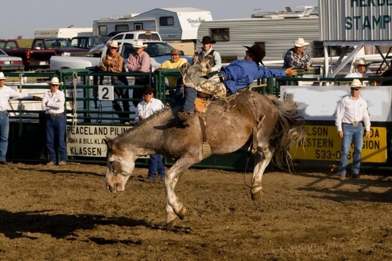 rodeo horse cowboy