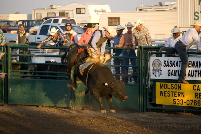 cowboy rodeo bull riding