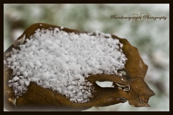 snow winter leaf