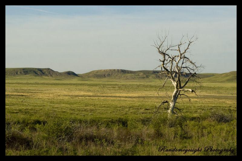 prairie grass tree