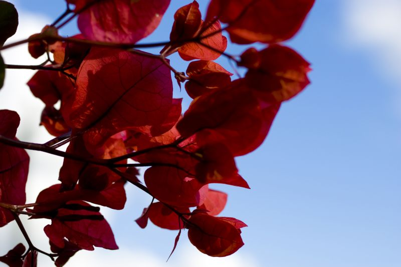 flowers red belize sky