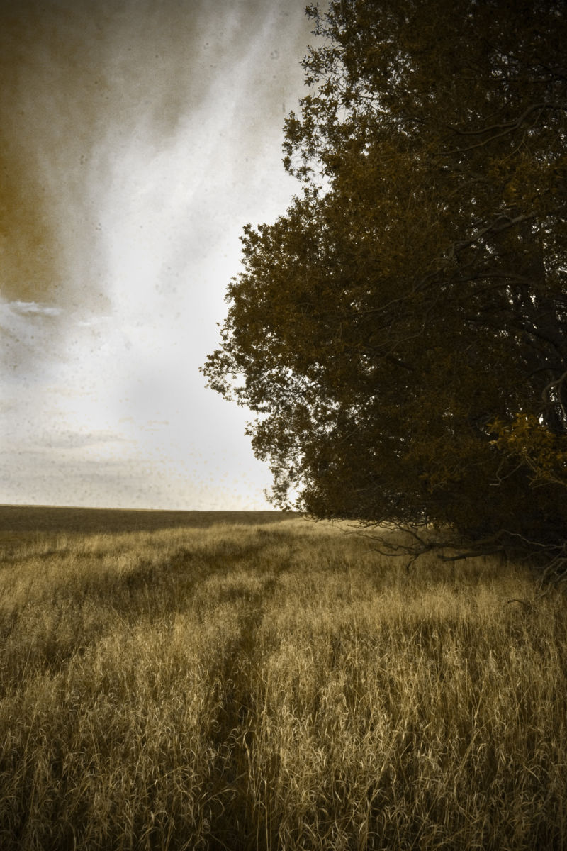 tree prairie sepia photoshop