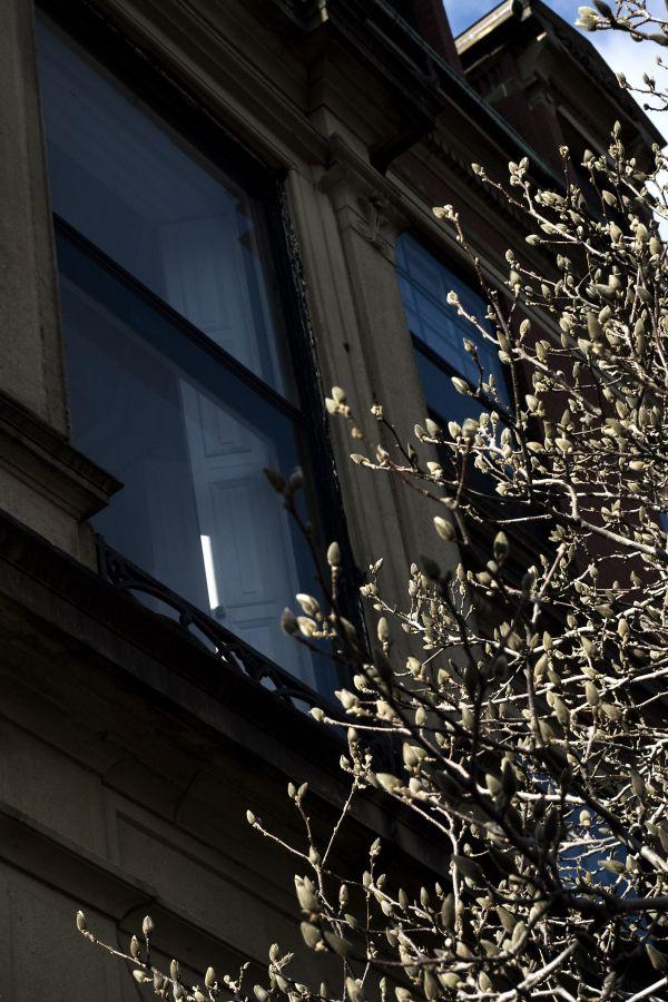boston tree window building