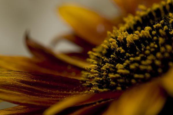 sunflower lighting green backdrop