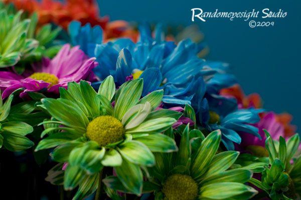 daisy green purple orange blue