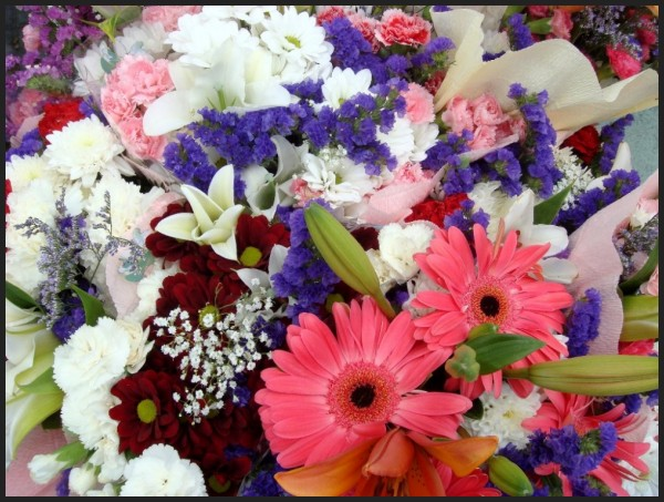 Flores de cores.