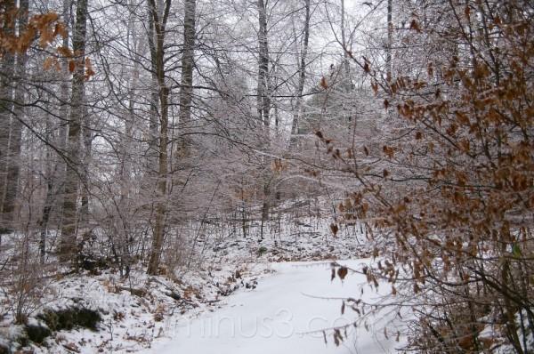 December 13 Ice Storm #1