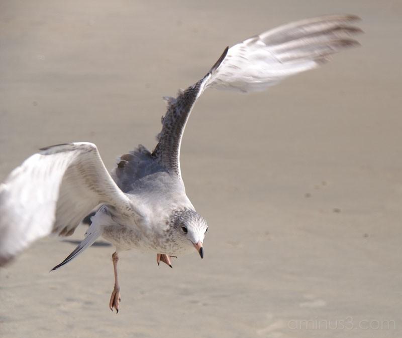 Seagulls 2