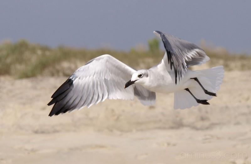 Seagulls 4
