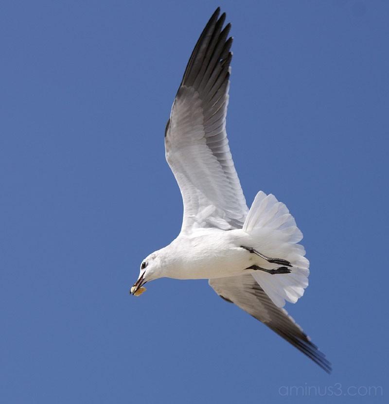 Seagulls 5
