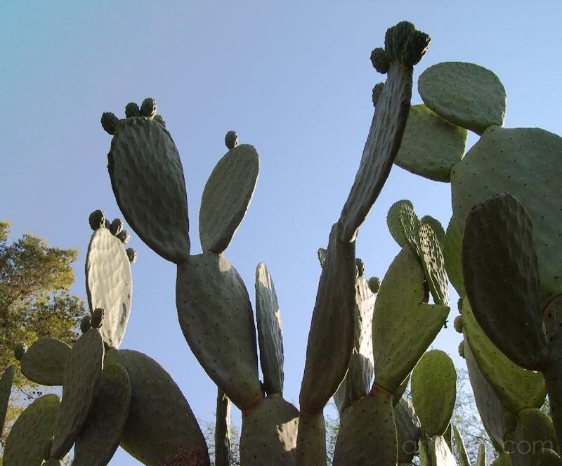 Arizona 1 (2005)