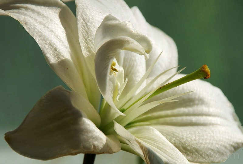 Bouquet 7