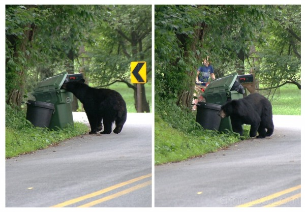 Close Encounter of the Bear Kind