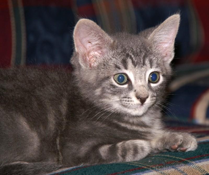 A Very Awake Kitten
