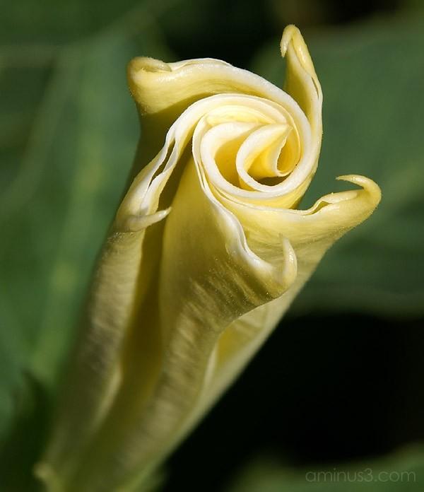 Longwood Gardens - Swirls