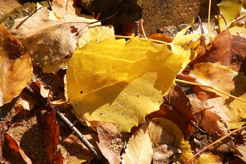 Merrill Creek Leaves