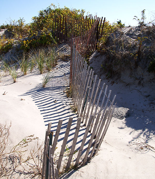 Fence and Dune