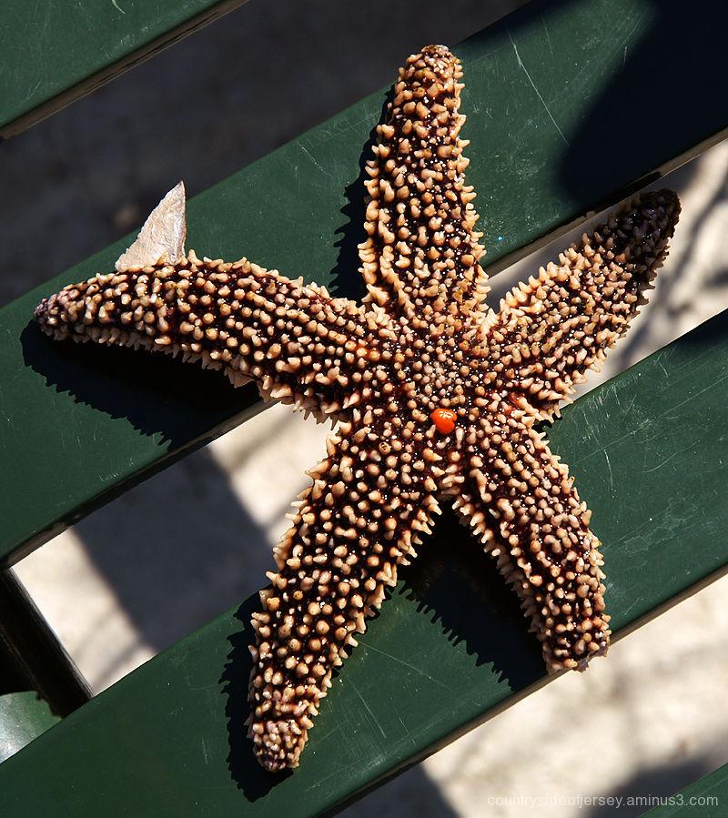 MJ's Starfish