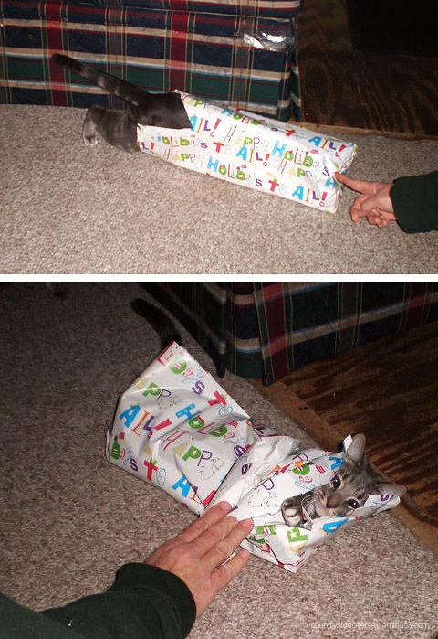 A Very Special Ella Christmas Present