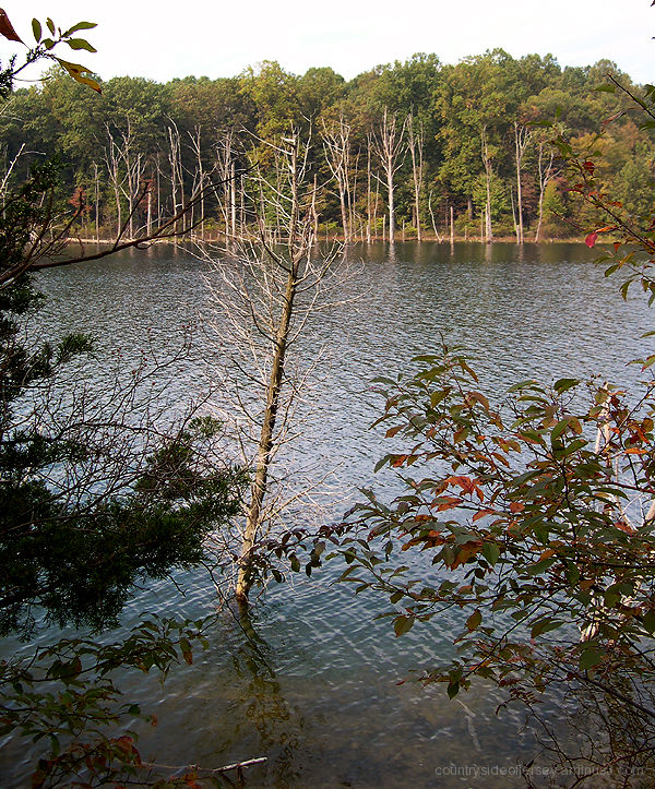 Leaning Tree at Merrill Creek