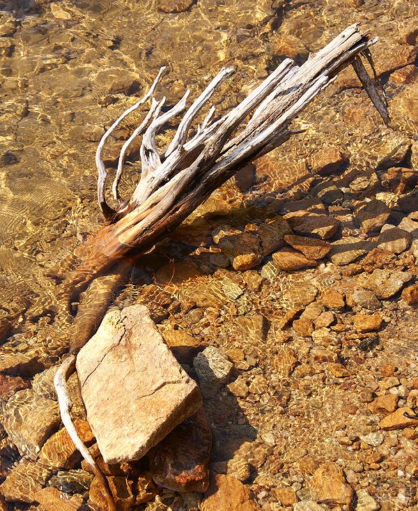 Merrill Creek Driftwood and Rock