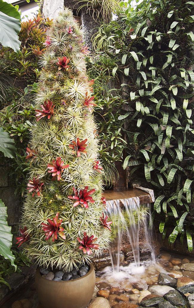 Cactus Christmas Tree