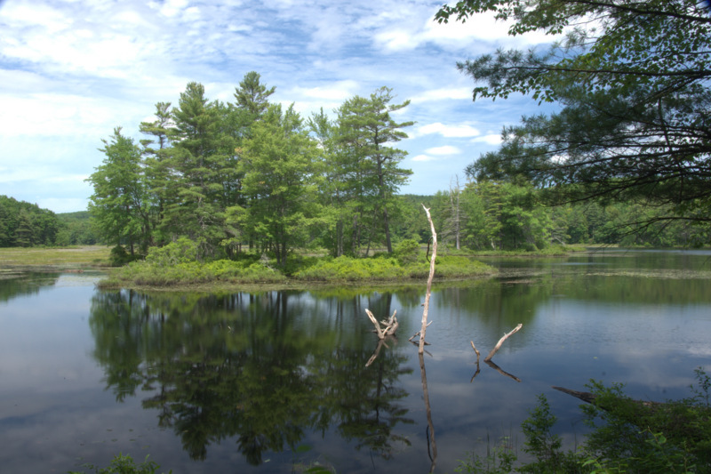 Harvard Pond