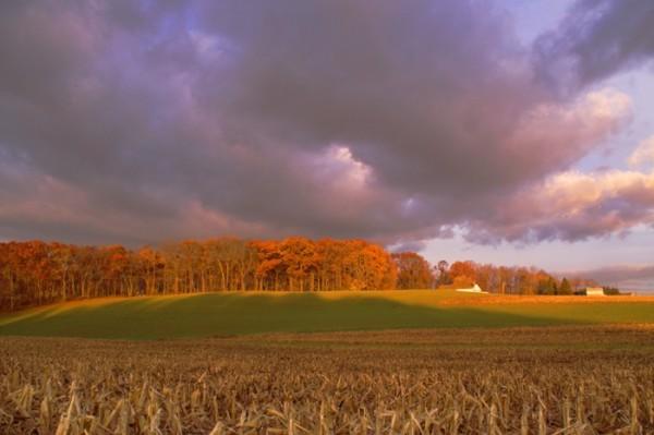 Oaks lit by morning sun