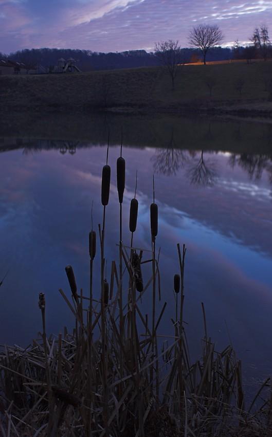 Cattails Before Sunrise