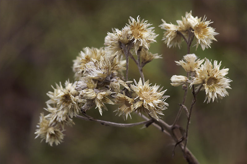 Winter Wildflowers