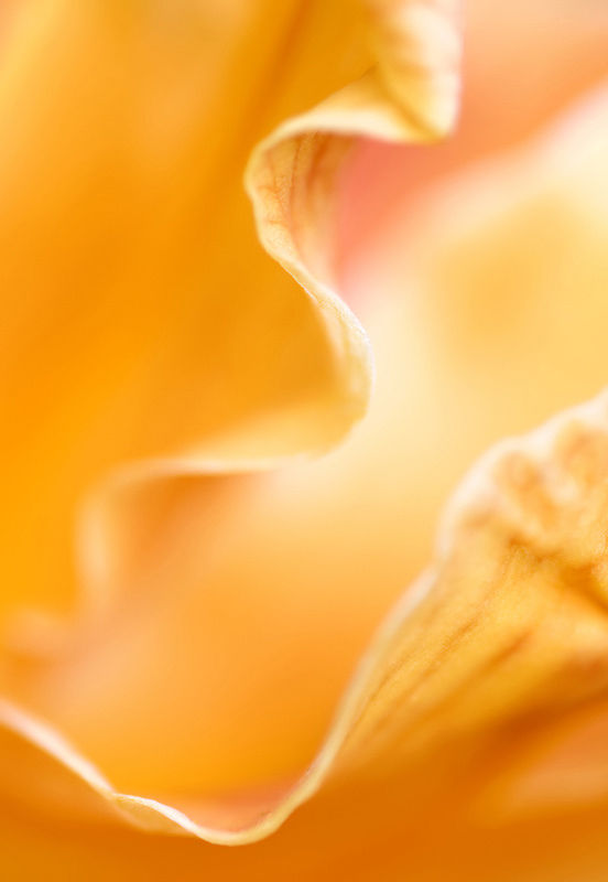 Abstract Daylily