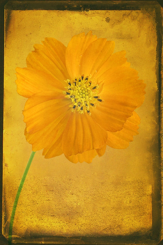 Orange flower with Texture