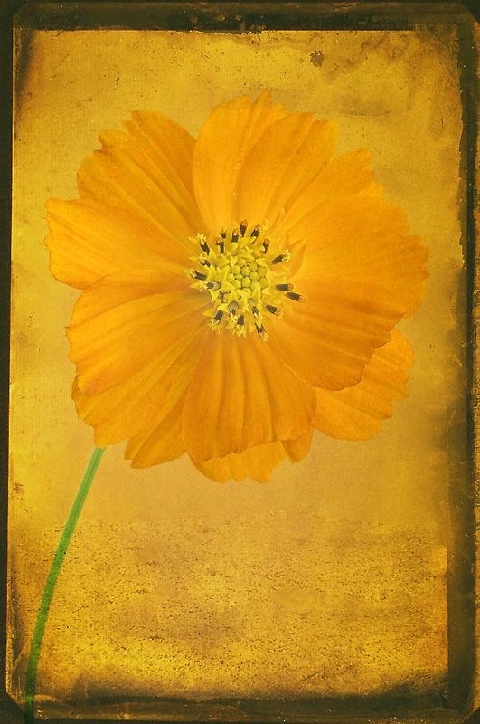 Orange flower with Texture