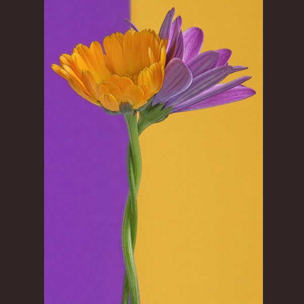 Complementary Colors 2