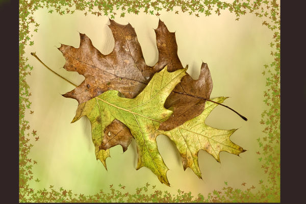 Oak Leaves with Border
