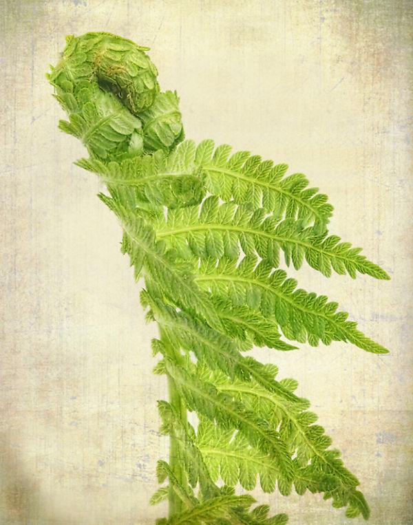 Green Monster or Fern?
