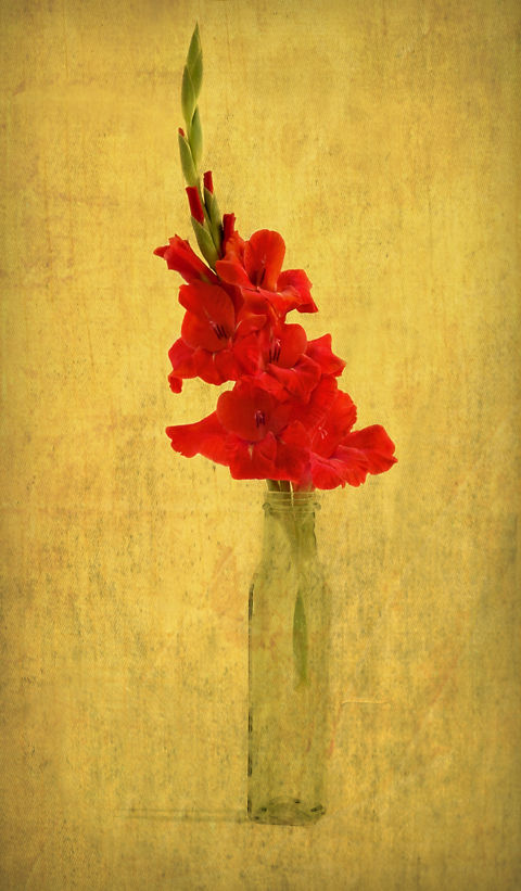 Gladiola with Textures