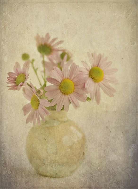 Mums Chrysanthemums Mums_in_Vase