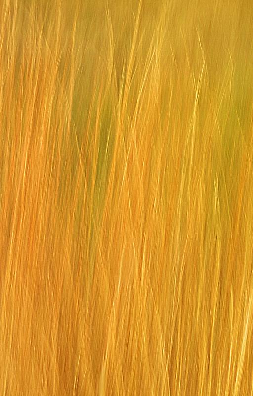 Grasses Pan