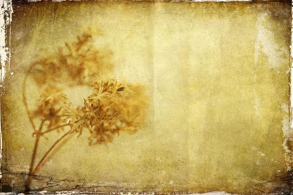 Winter Seed