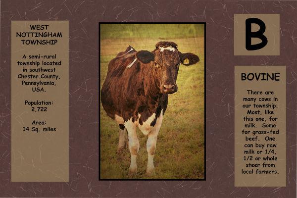 Bovine=Cow