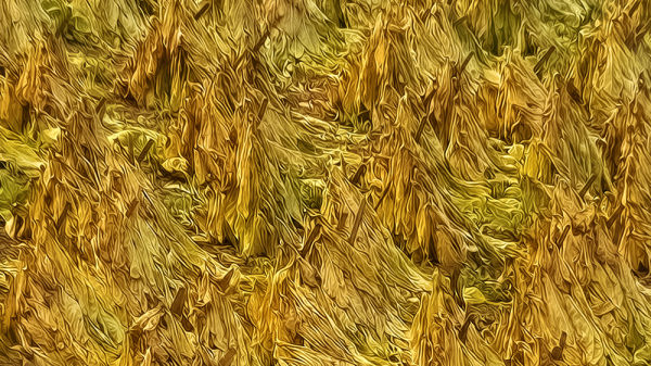 Tobacco Abstract