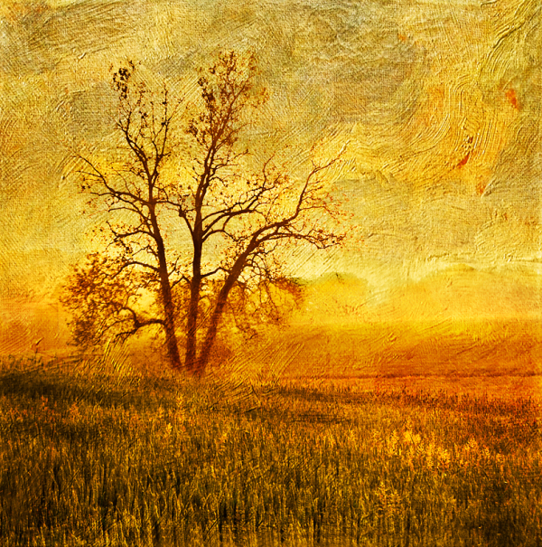 Morning Tree
