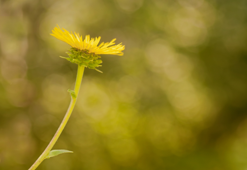 Yellow flower with bokeh