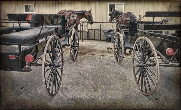 Amish Horses and Wagons