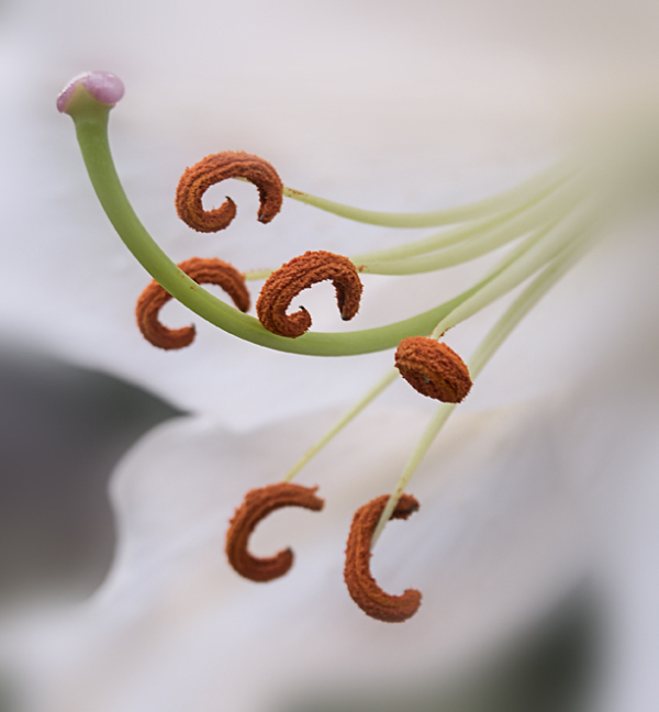 Stamens and Pistils