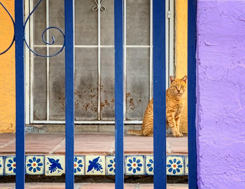 Tucson, Arizona house detail with cat