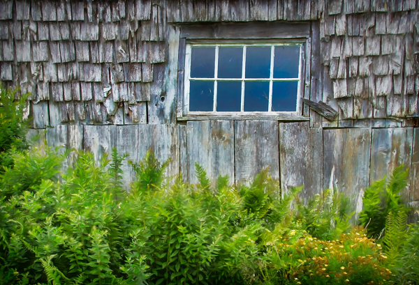 Old Shingled Barn