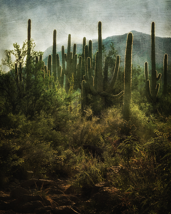Saguaro National Park, West, Tucson, Arizona
